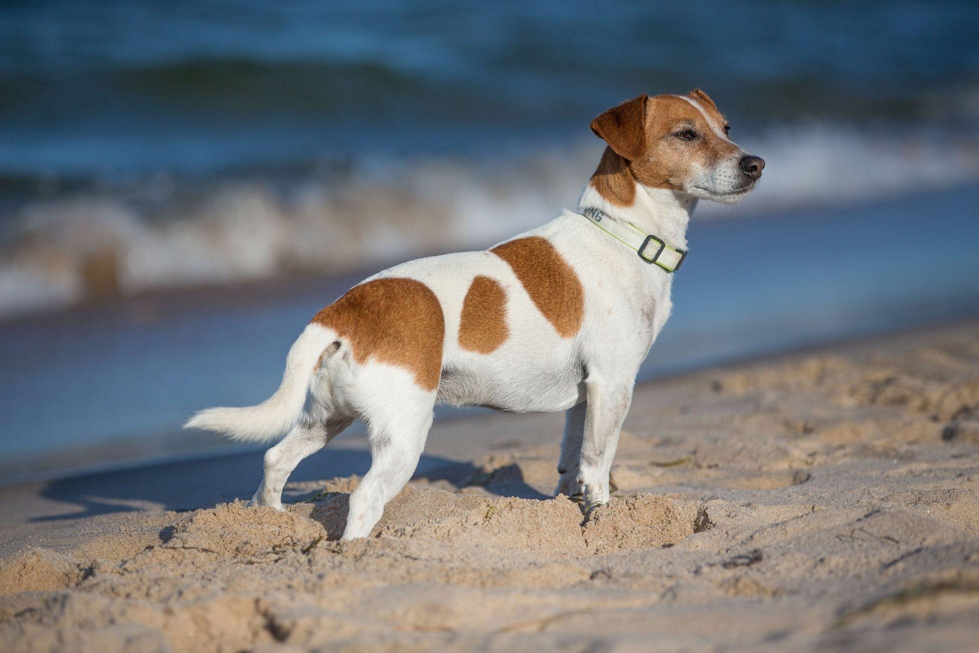 Goehren Strand Hund1