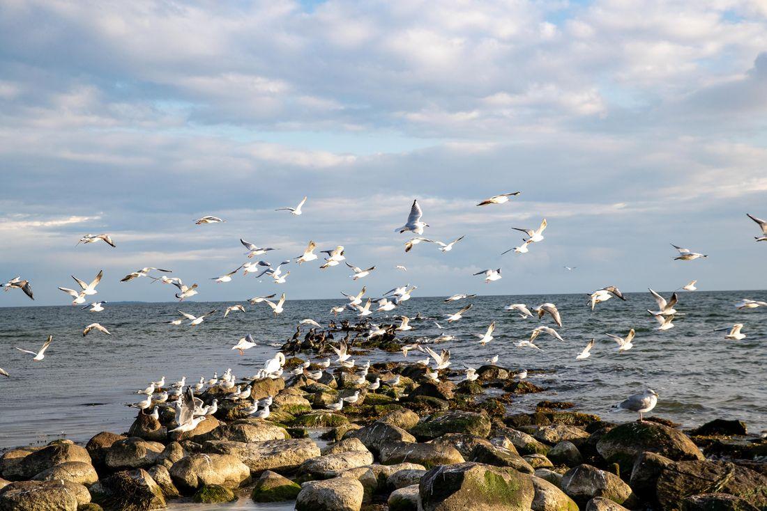 Die großartige Vogelwelt auf Rügen