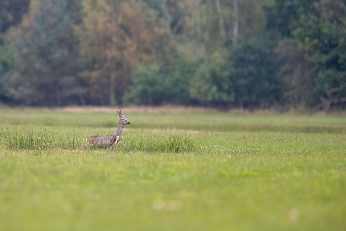 Baaber Heide - Blaubeermund und Heidekraut